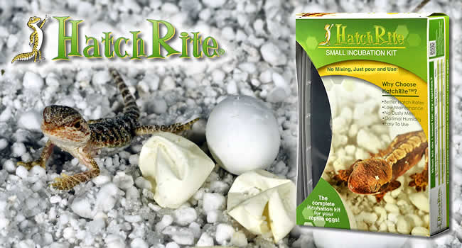 Incubator for turtles and other reptiles